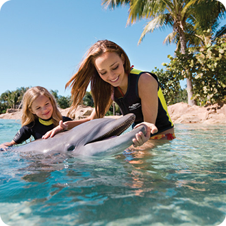 Girl playing with dolphin